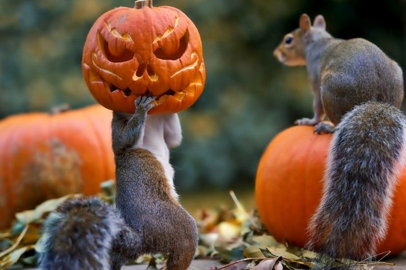 Preview wallpaper halloween, squirrels, pumpkin, mask 1920x1080
