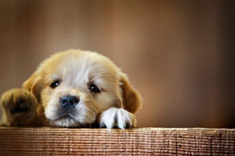 Cute Baby Dog Desktop Wallpapers