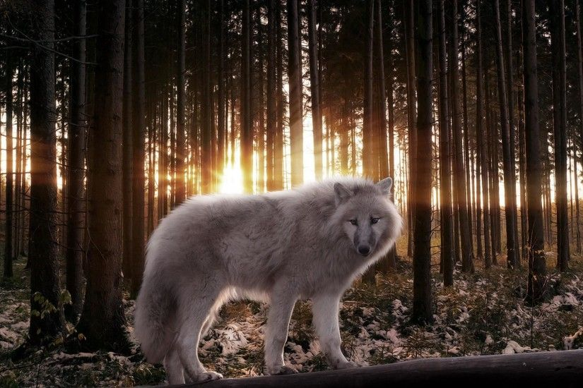 Animated Wolf Wallpaper 1999×1333 Wolf Wallpapers Desktop (40 Wallpapers) |  Adorable Wallpapers