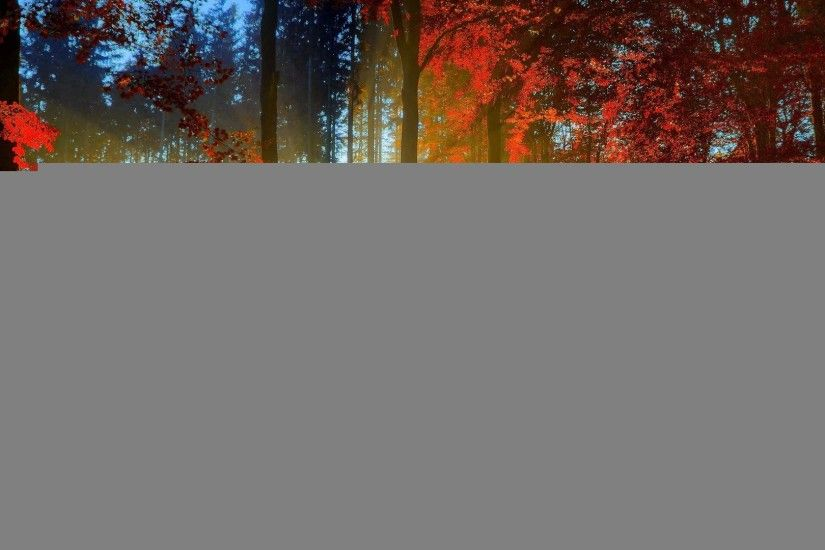 ... Autumn trees and walking path wallpaper from PicsWalls ...
