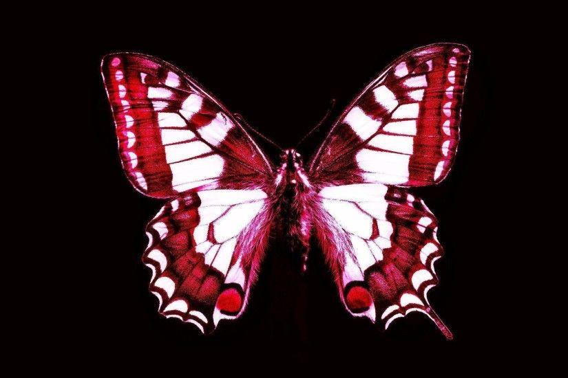 Red Butterfly Wallpapers | True HD Pictures