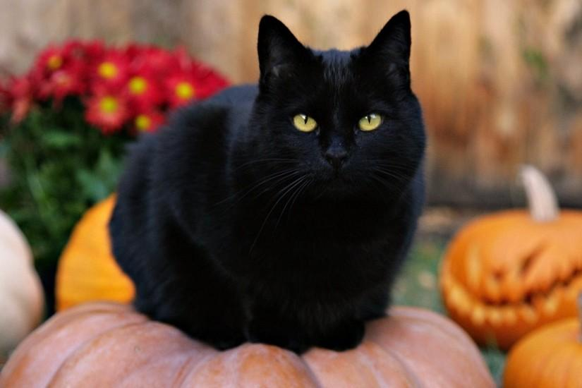Black Cats Wallpaper 514376 ...