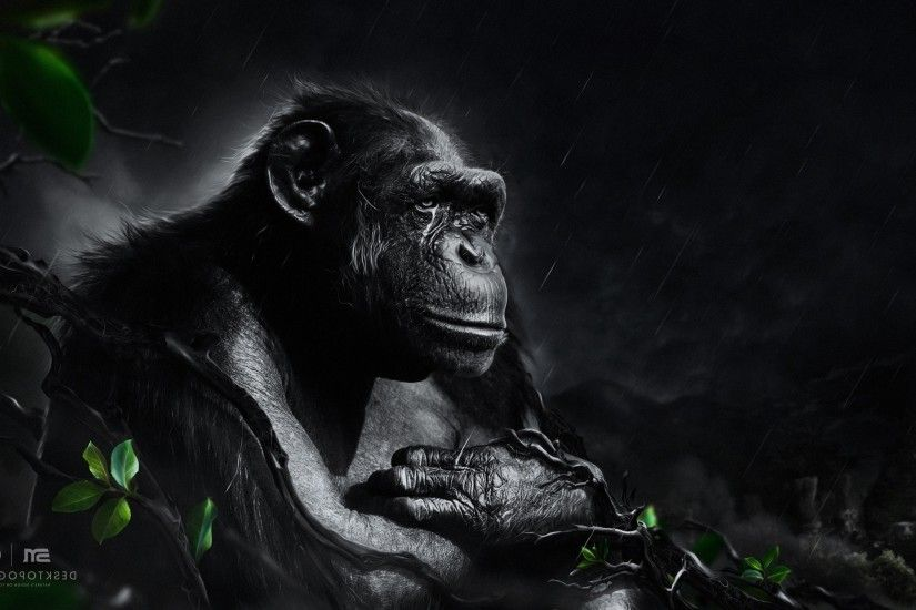 Desktopography, Animals, Rain, Apes, Digital Art, Monkeys Wallpapers HD /  Desktop and Mobile Backgrounds