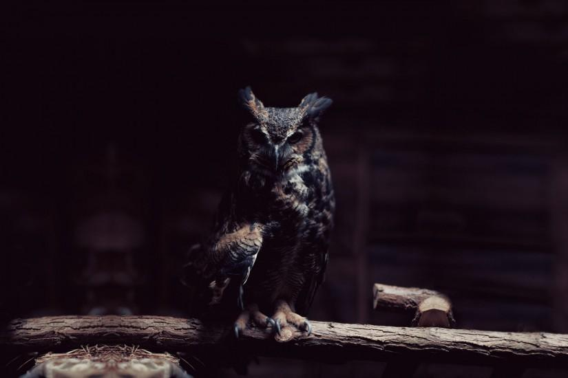 popular owl wallpaper 1920x1200 for retina