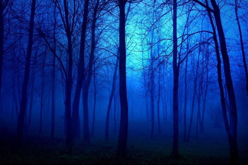 download free dark forest background 1920x1080 windows 10