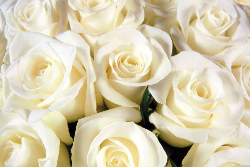 amazing flower white roses background hd wallpapers - Wallumi