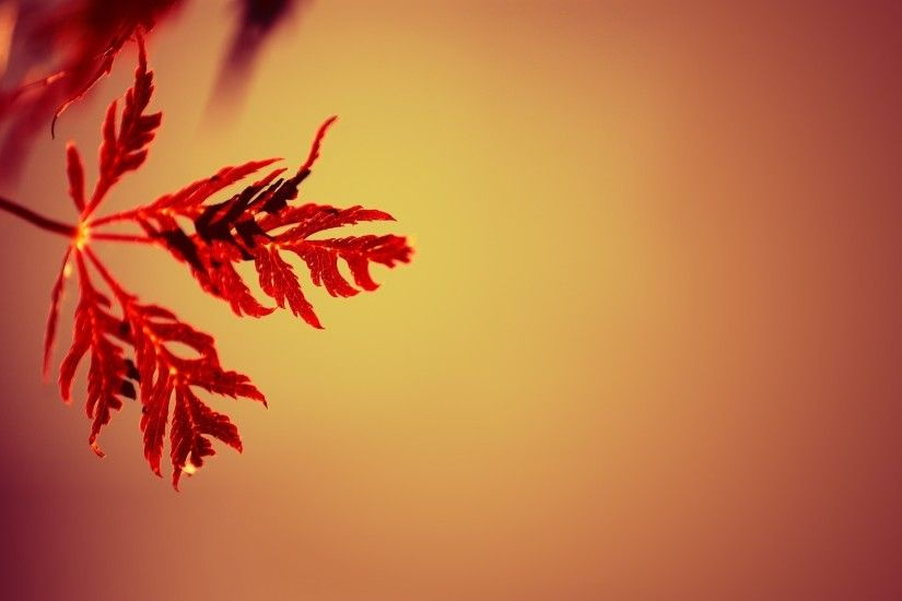 nature, Simple, Simple Background, Leaves, Gradient, Depth Of Field, Macro,  Red Wallpapers HD / Desktop and Mobile Backgrounds
