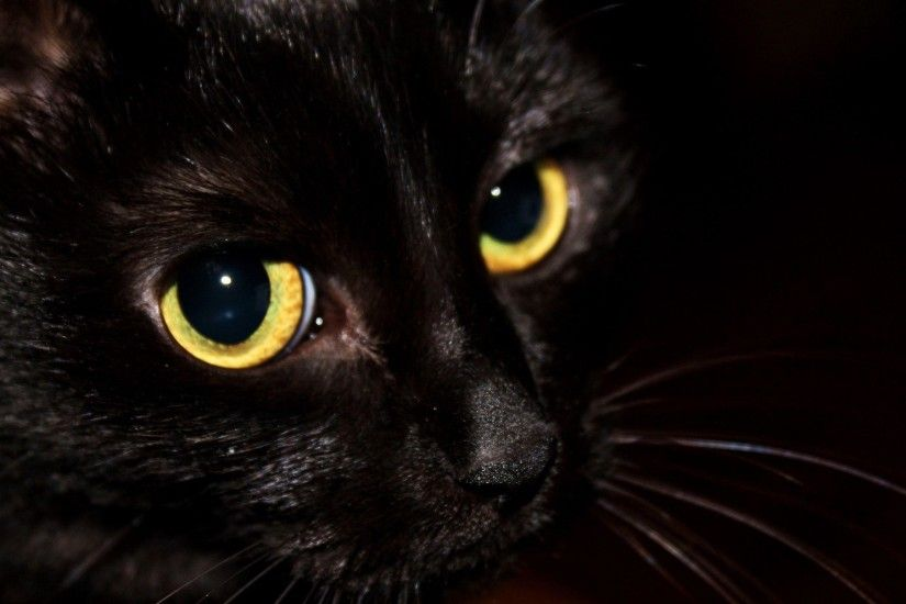 Black Cat Wallpaper 57 377125 High Definition Wallpapers| wallalay.