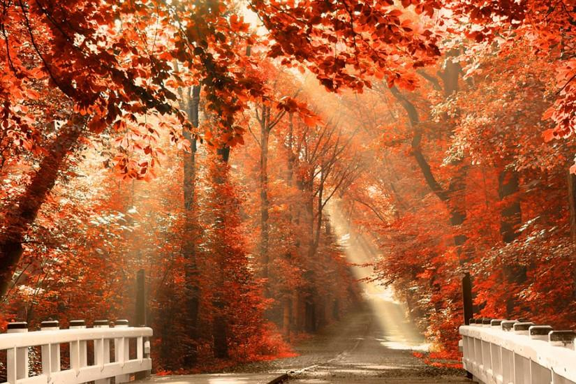 widescreen fall desktop backgrounds 1920x1200 hd for mobile