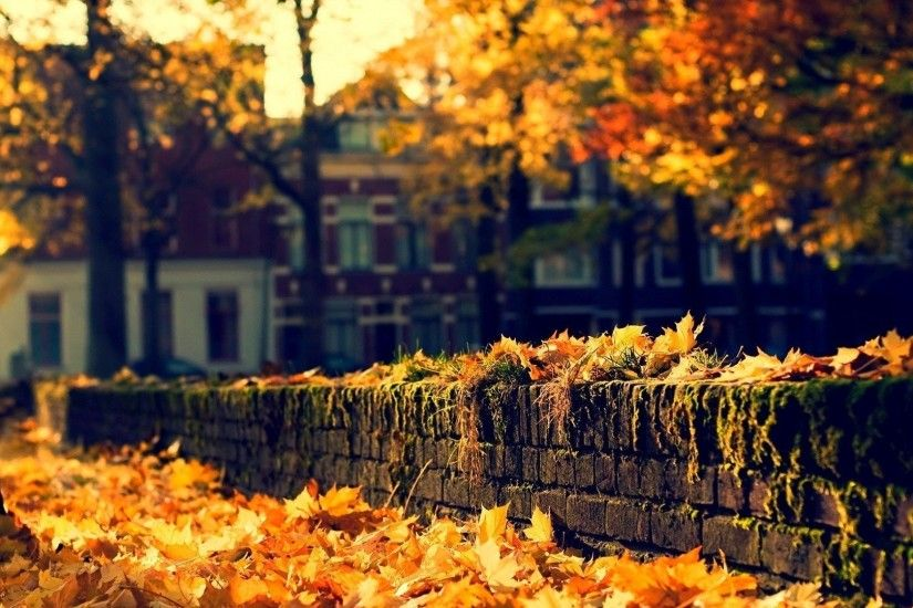 nature architecture house autumn leaves trees street city nature autumn  leaves tree street town architecture house
