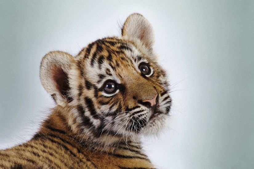 Tiger Baby Face Cute #21