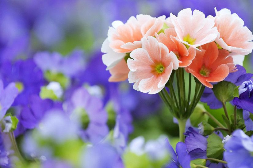 ... most beautiful pictures of flowers Best 25 Beautiful flowers wallpapers  ...