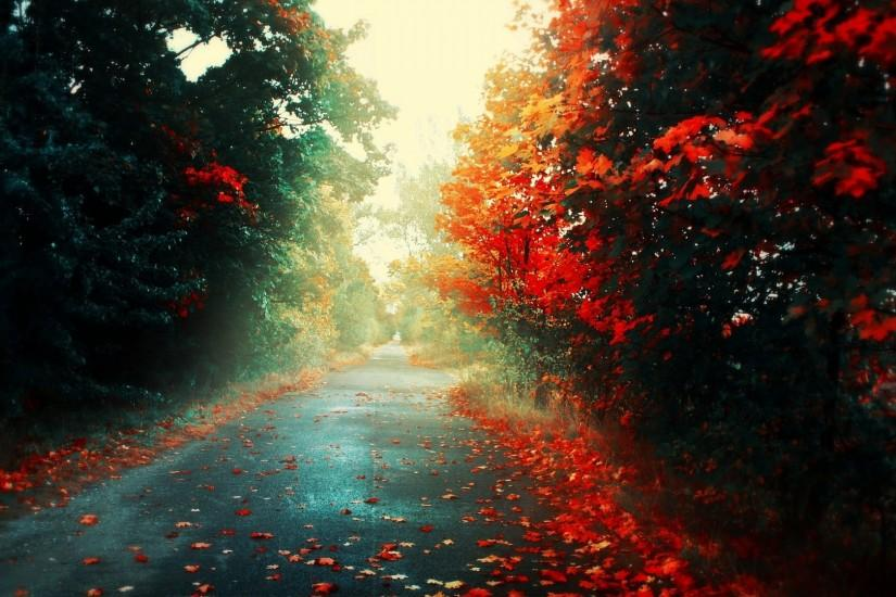 Road Autumn Wallpapers HD free download.