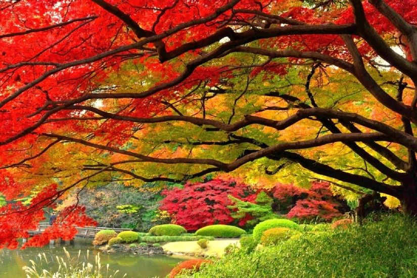 17 Best images about Japanese Garden/Trees/Flowers on Pinterest .