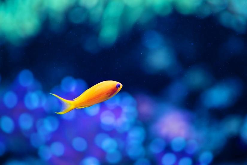 popular fish wallpaper 1920x1080 for meizu