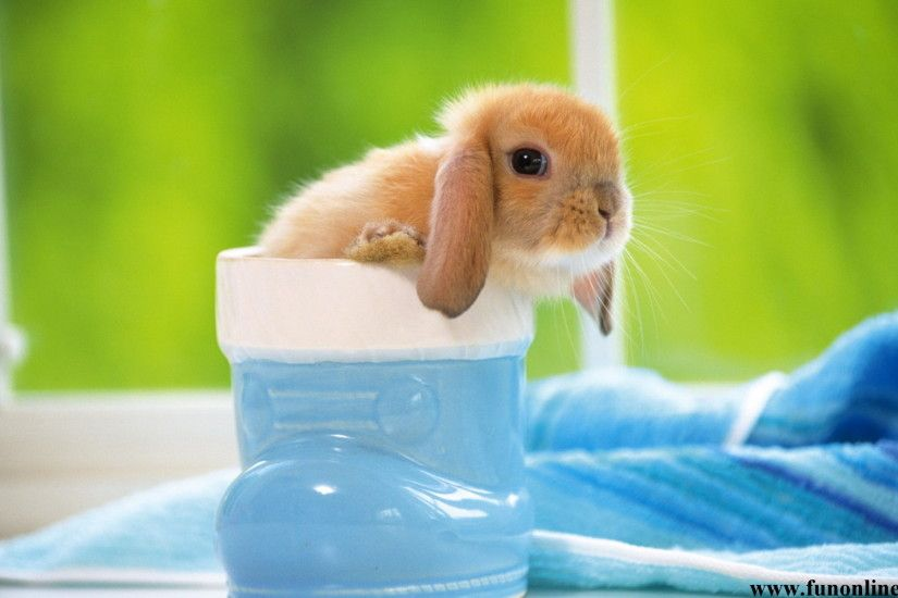 Cute Bunny In A Cup - Viewing Gallery
