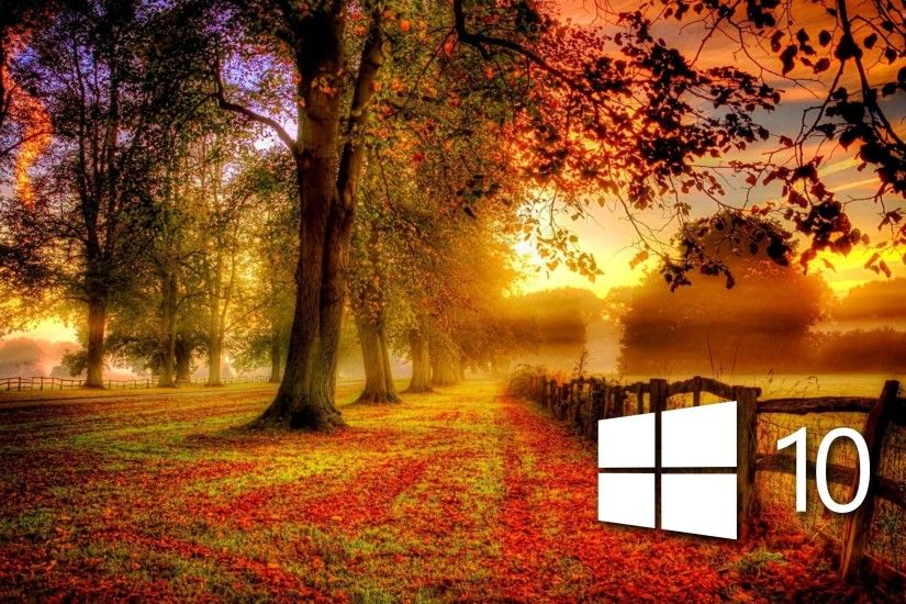 Windows 10 in the fall simple logo wallpaper