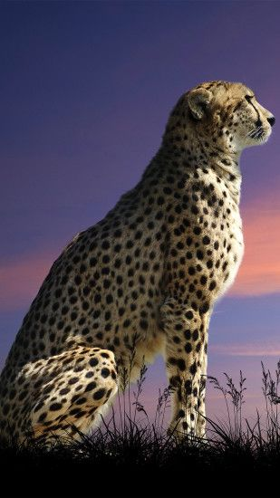 wallpaper.wiki-Cheetah-Wallpaper-Full-HD-for-Phone-