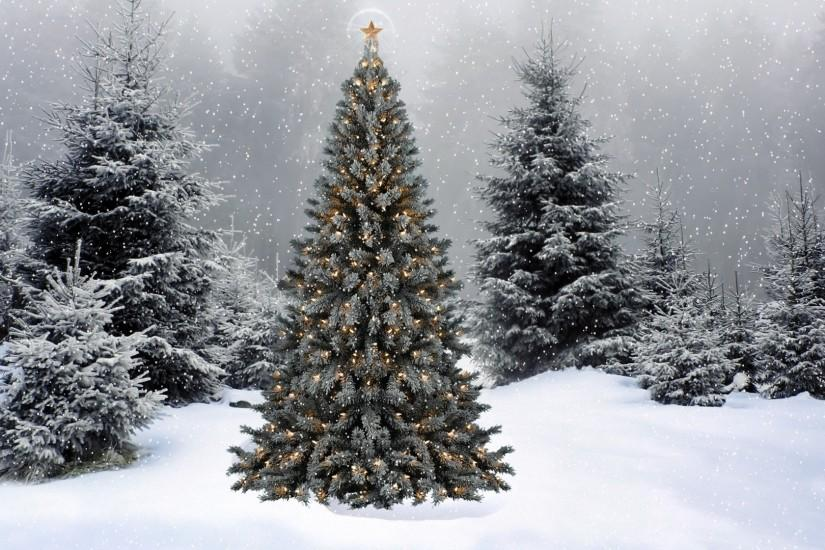 christmas tree wallpaper 1920x1080 free download