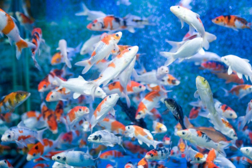 Coral Reef Aquarium Animated Wallpaper http://www.desktopanimated .