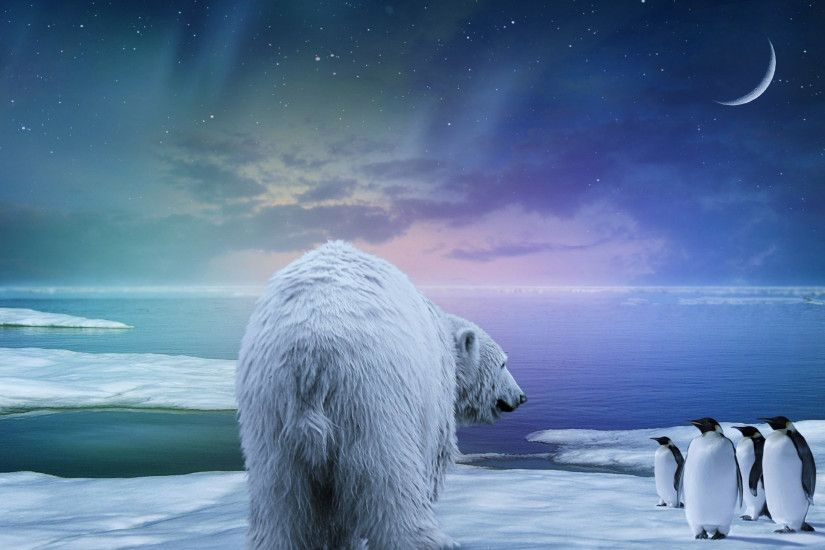 Preview wallpaper polar bear, penguin, northern lights 2560x1440