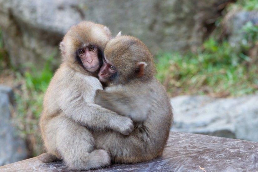 2560x1600 Wallpapers For > Funny Baby Monkey Wallpaper