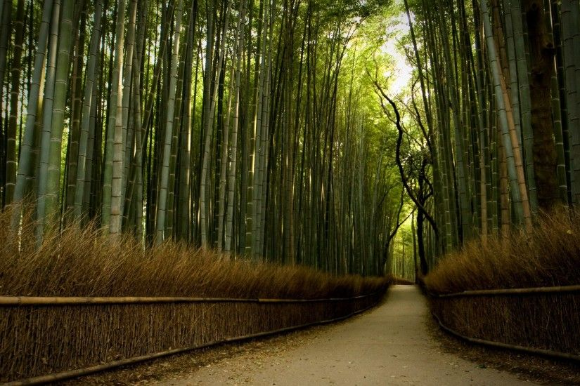 Beautiful Path in Bamboo Forest HD Wallpaper From Gallsource.com