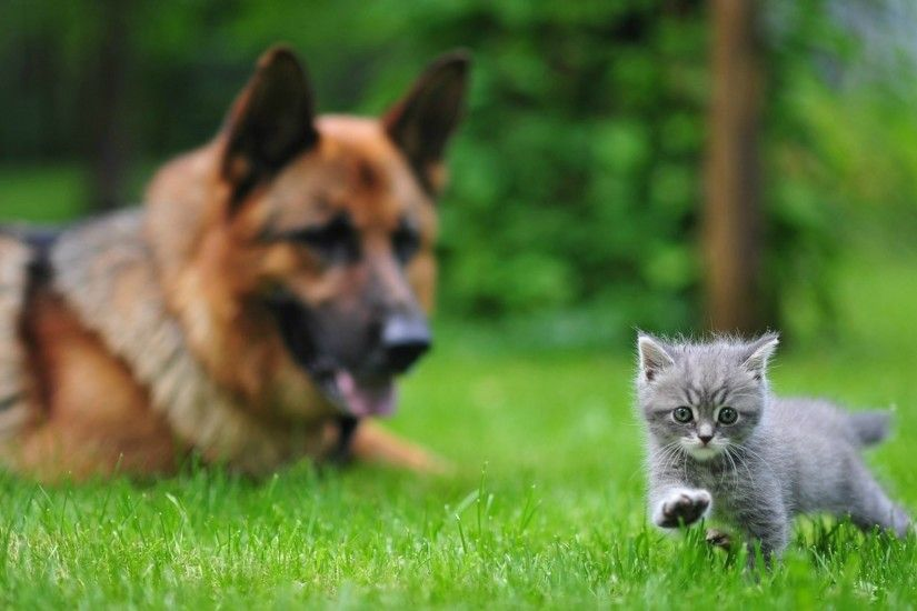 1920x1080 Wallpaper dog, cat, blurring, grass, walk
