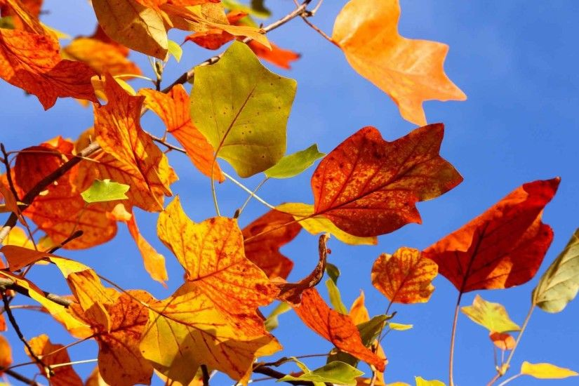 Leaves Autumn Fall Trees Background Image Nature