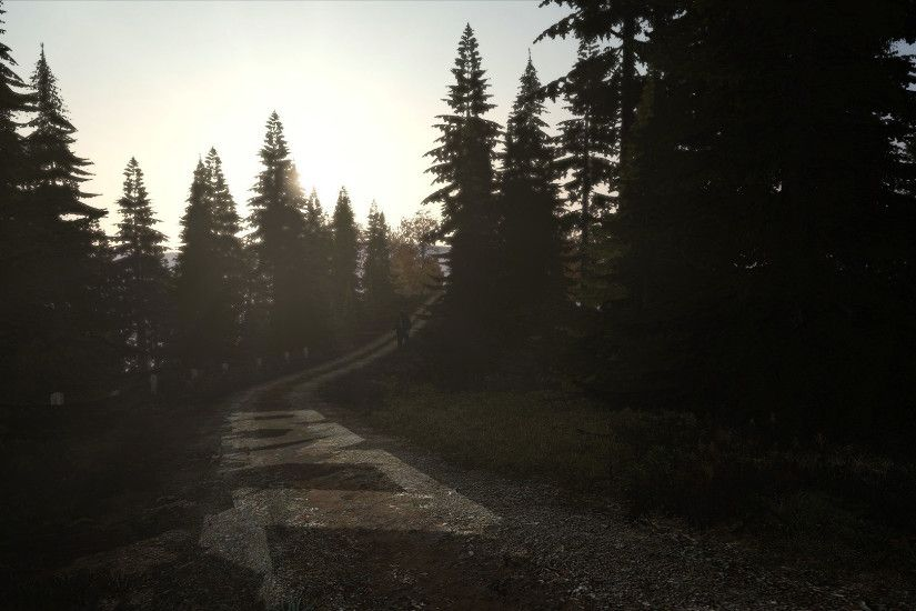 DayZ Forest Trail by guyver1 DayZ Forest Trail by guyver1