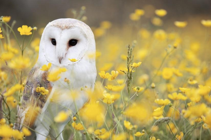 Preview wallpaper owl, barn owl, bird, predator 3840x2160