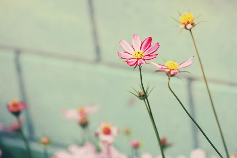Download Convert View Source. Tagged on : Flower Wallpaper Tumblr Desktop  ...