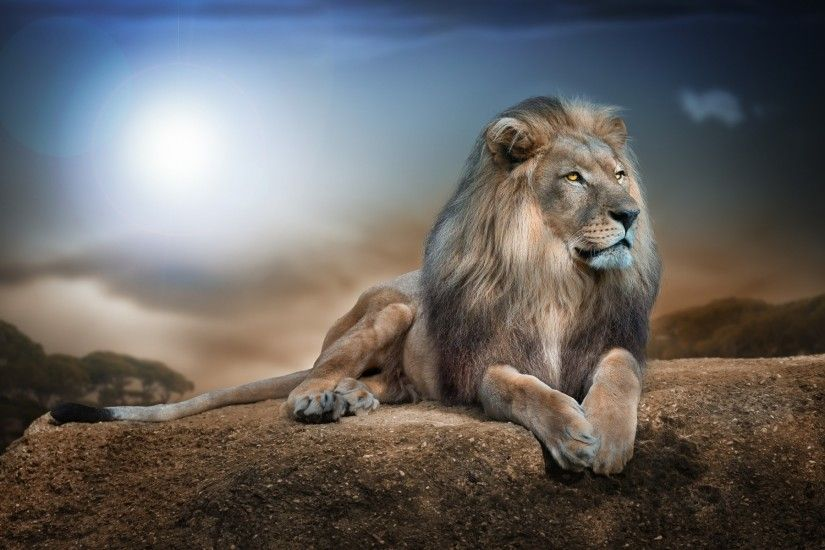 2560x1600 Truly Magnificent White Lion Wallpapers to Spice Up your White  Lion Images Wallpapers Wallpapers)