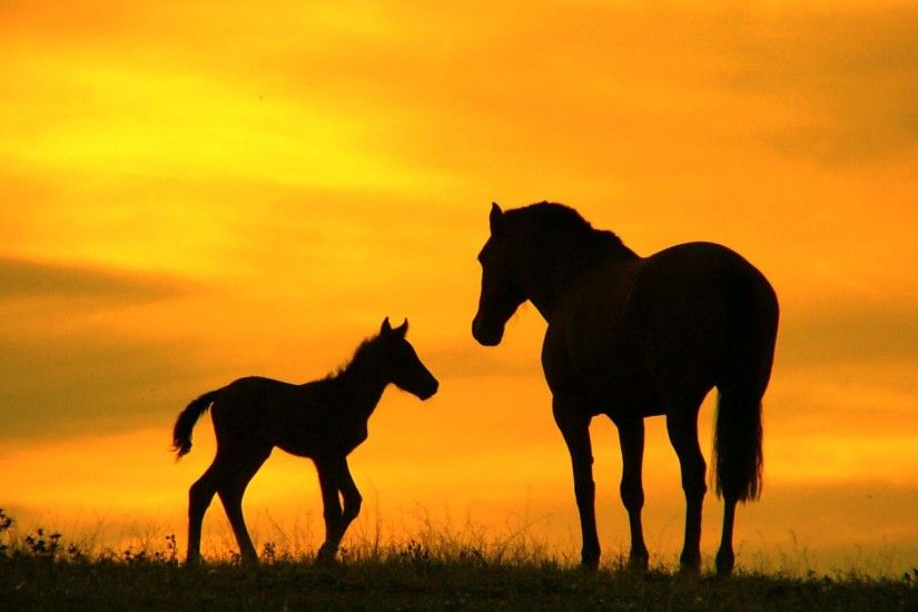 Wild Horses Sunset wallpaper wide