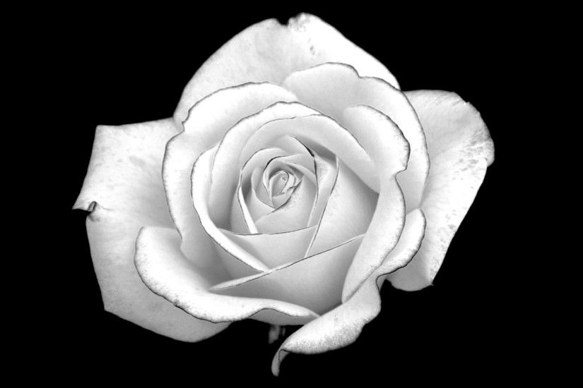 Black And White Rose Desktop Background. Download 2560x1363 ...