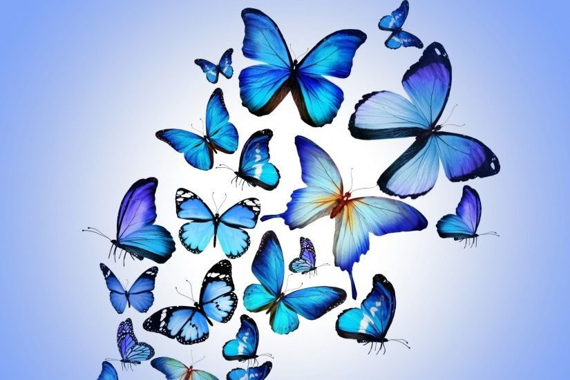 Preview wallpaper butterfly, colorful, blue, drawing, art, beautiful  2048x1152