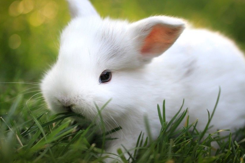Free Cute Bunny Wallpaper