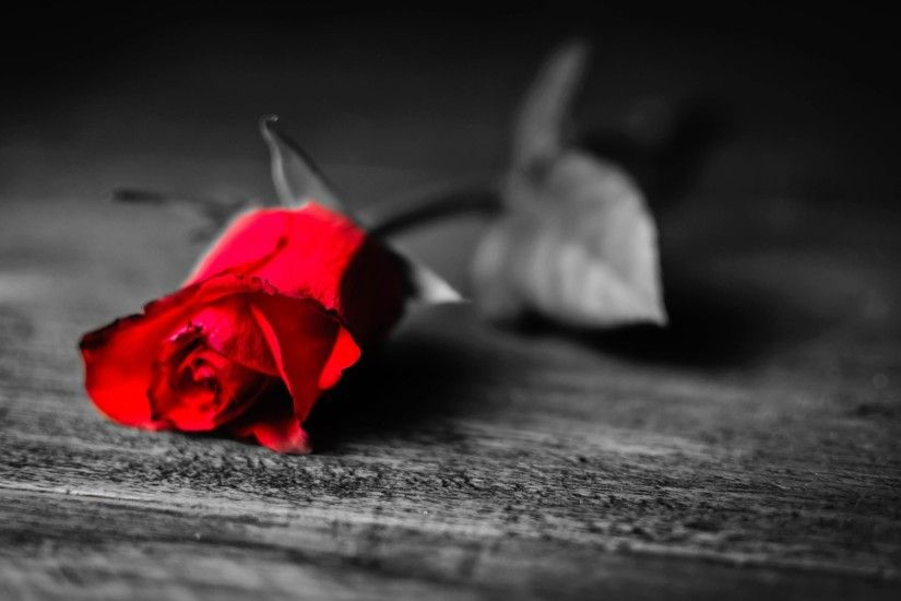 Red Rose Black And White Background