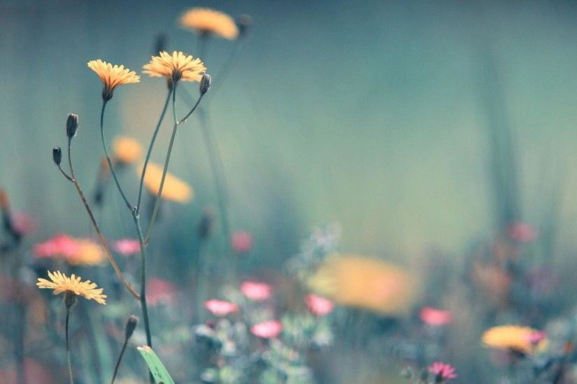 simple-flowers-background-wallpaper-wp2009688