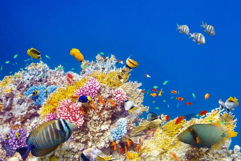 underwater world coral reef tropical fishes ocean underwater world fish  ocean coral reef