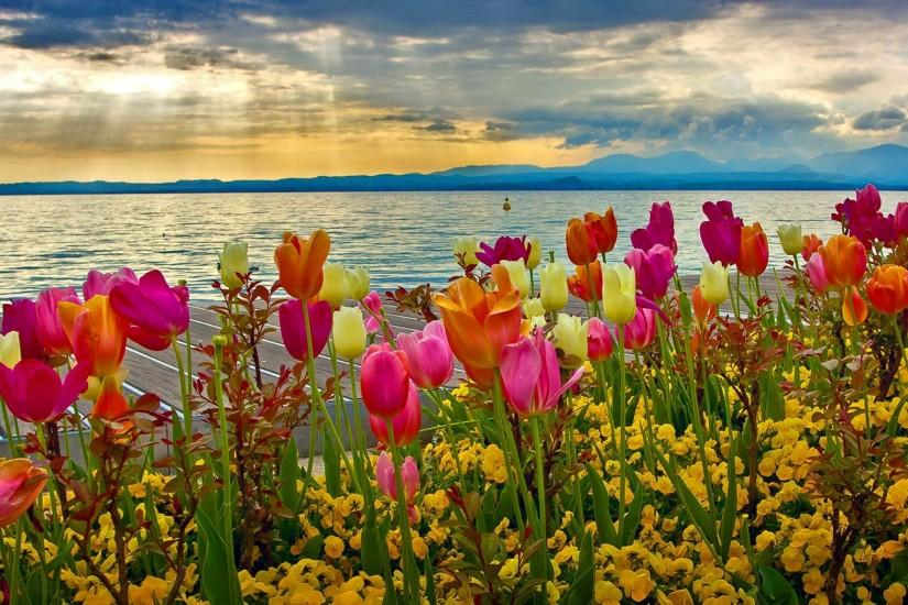 amazing spring flowers wallpaper 1920x1182