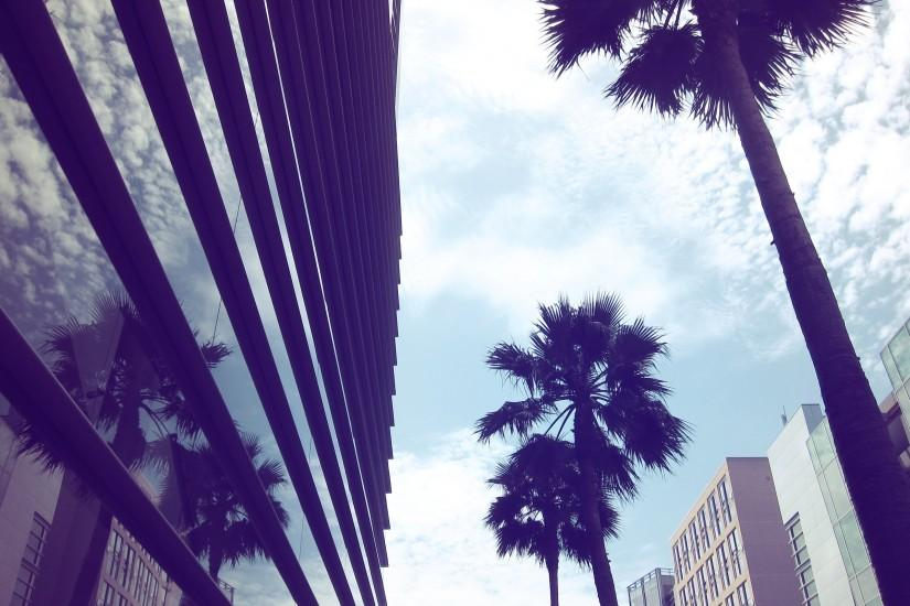 Glass architecture Muse urban buildings palm trees modern reflections  cities wallpaper | 2560x1600 | 198307 | WallpaperUP
