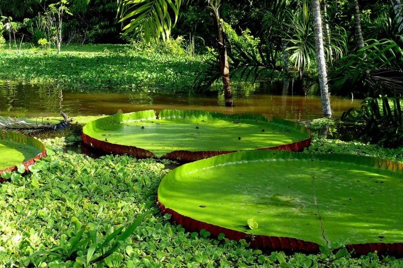 Wallpapers Lily Pads In The Lake Photo Pictures Car Pictures