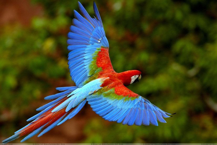 "You are viewing wallpaper titled ""Beautiful Blue Bird ..."