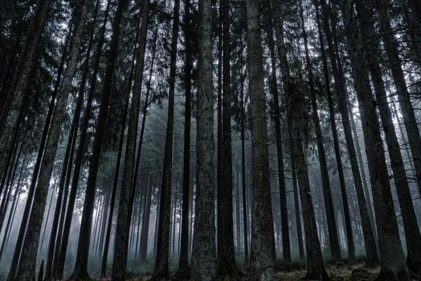 download free dark forest wallpaper 3840x2160 for xiaomi