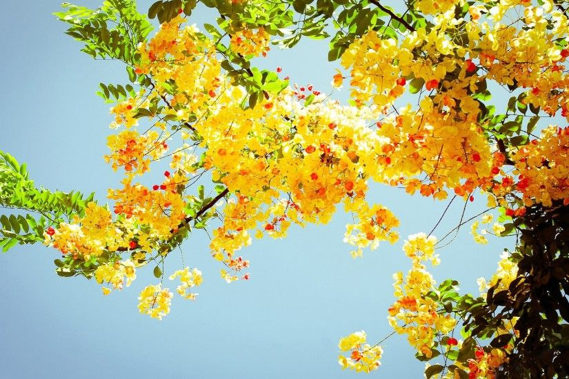 High Quality HD | DSC100564577.jpg Pretty Summer Flower Wallpaper