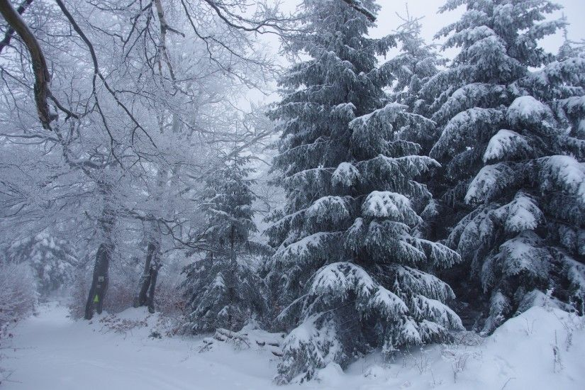 Winter forest trees snow landscape gs wallpaper | 2560x1600 | 147061 |  WallpaperUP
