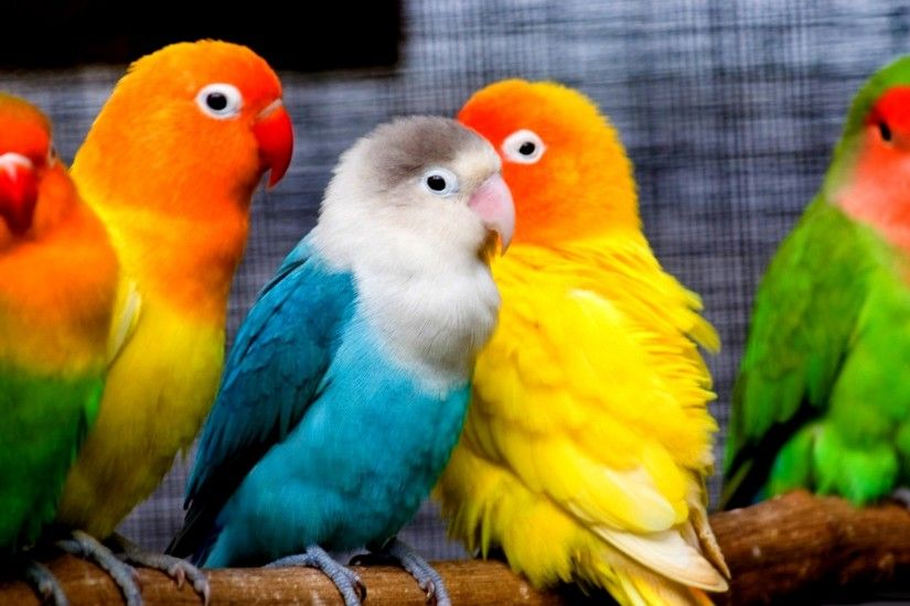 gorgeous parrot wallpaper