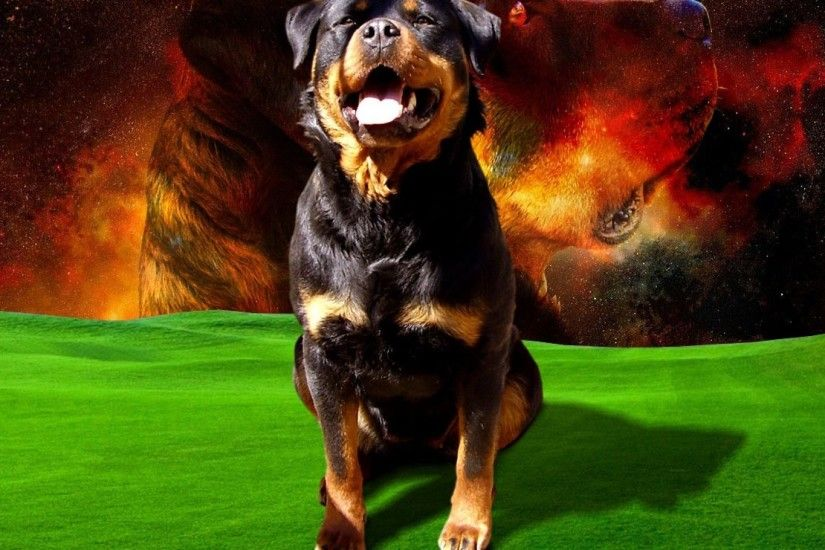 Rottweiler Dog Dogs Inspired Wallpaper Detail
