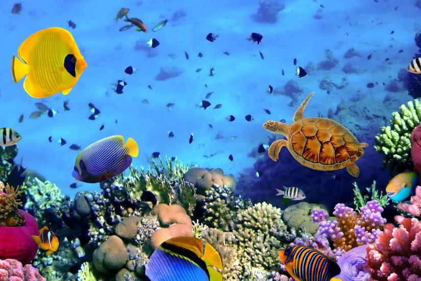 Coral Reef Wallpaper Free #Rs0